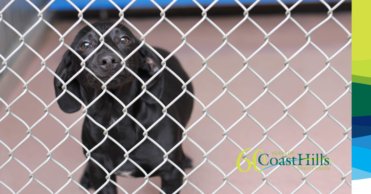 A dog noses up to a chain link fence from inside its enclosure at a local animal shelter.