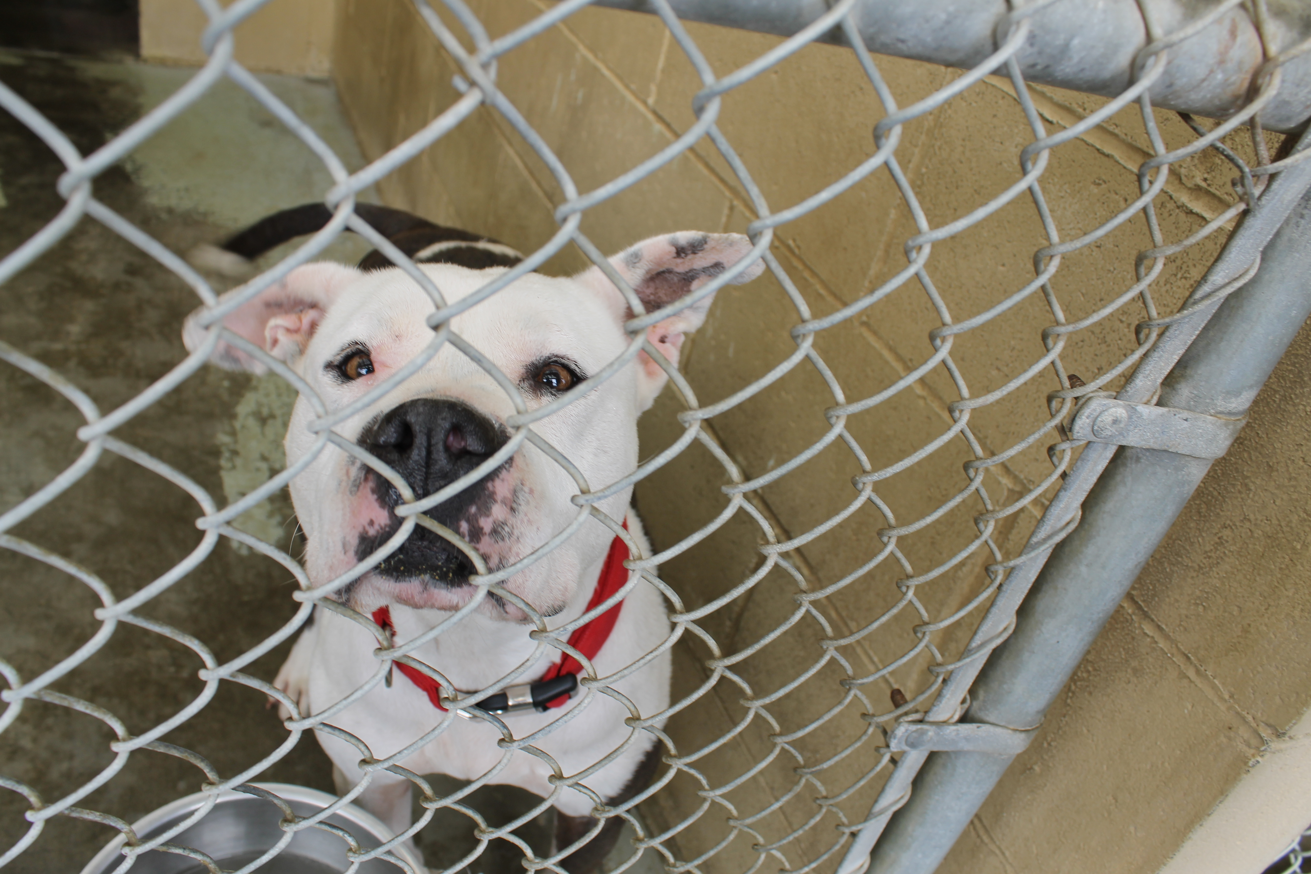 lompoc animal shelter